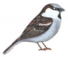 I Spy a Sparrow