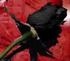 A Requiem For Modern Romance