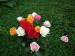Rose Season