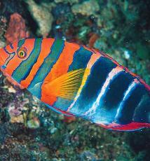 Healing Fish