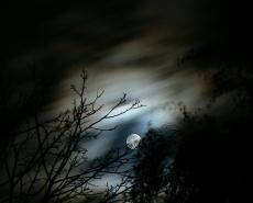 Dark Lost