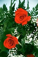 Romance Garden