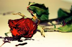 A Death of Roses