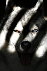 Eye of the Wolf: The Untamed Pack