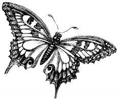 My true love, my butterfly