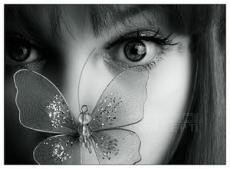 Butterflies, r.i.p