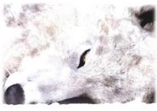 Moonlit Huntress (Indefinitely Postponed)