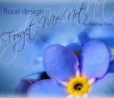 Forget-Me-Not--The story of a budding life