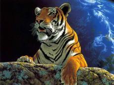 Moonlit Tiger