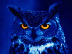 An Owl's Nightmare