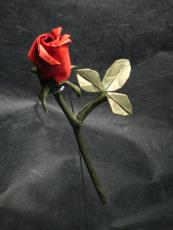 Lay A Rose On The Grave