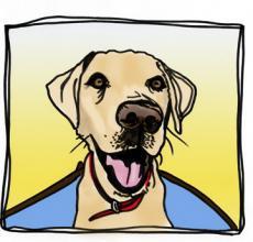 Jesse Dog