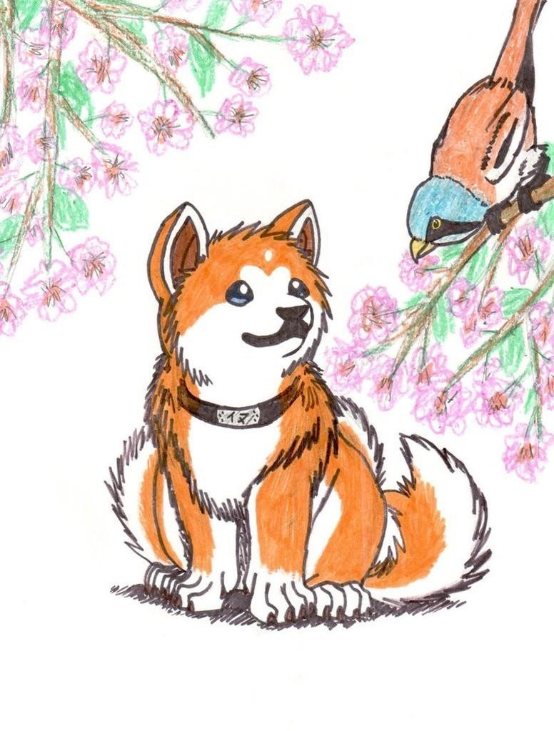 собака акита рисунки