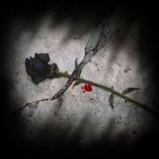 Melody der Black Dahlia