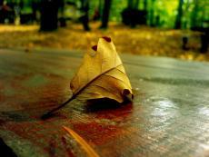 The Misanthropic Leaf