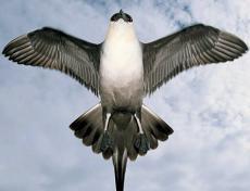 As a Bird