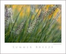 Summer Breeze - by Anja Tsunami