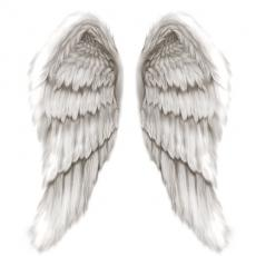 Open Your Wings