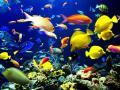 An Aquarium of Awesomness!