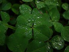 !!Luck!!