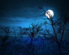 The Midnight World