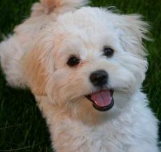 .My Dog,Tommy.