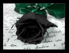 Clutching A Black Rose