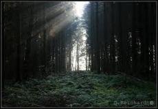 Forest Slumber