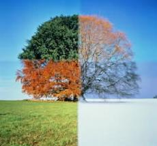 Seasons of Apathy