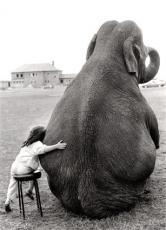 I Wish I had an Elephant