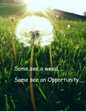 Need be a WEED...