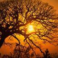 Just Like A Tree