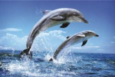 When do dolphins cry?