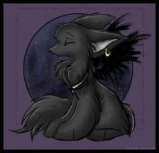 My precious wolf baby