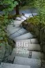 Steps I Never Took