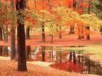 My Autumnal Love