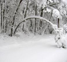 Snow * *