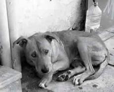 Animal abuse :(