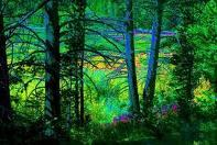 Through Wood and Forest I Wonder Alone