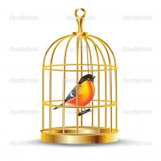 My Gilded Cage