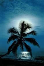 Moonlight Enchantment