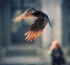 I wanna fly...