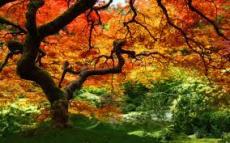 Autumn's Kiss