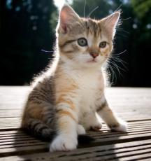 My Kitty - Love Poem