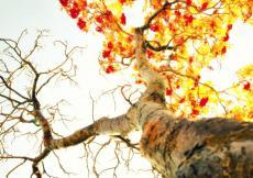 My dream to leaf