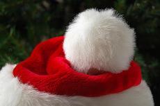 LCOC Christmas 2: Simeon