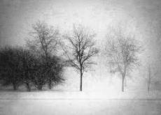 Snowy Lands