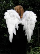 My Wings On My Back