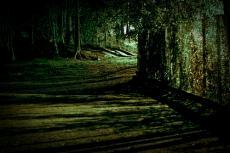 The Walker of Night