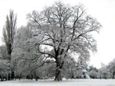 THE SNOW COVERED TREE